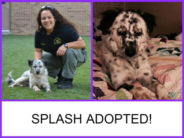 SPLASH ADOPTED