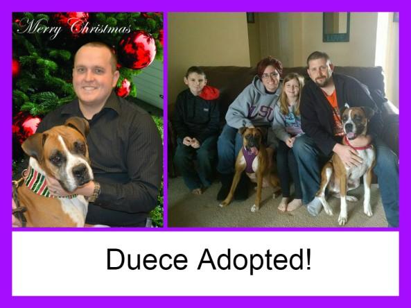duece adopted