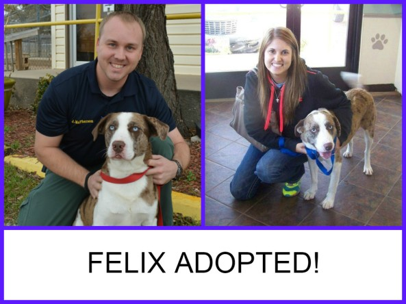 FELIX ADOPTED 1