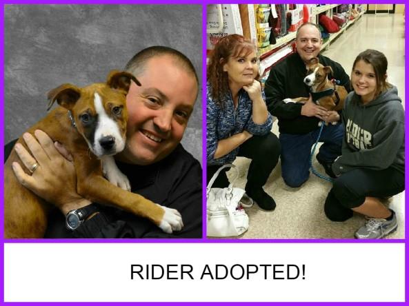 Rider Adopted