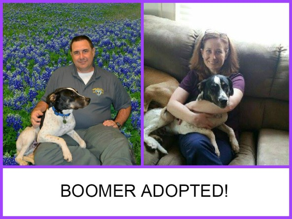 Boomer adopted