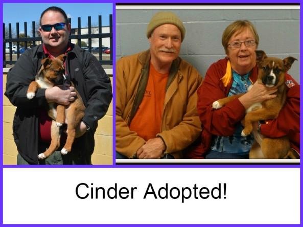 Cinder Adopted