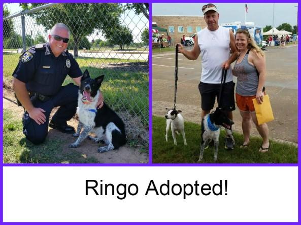 Ringo Adopted