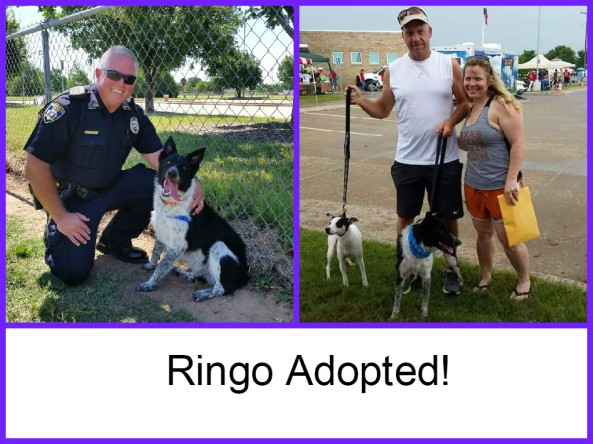 Ringo Adopted