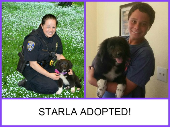 Starla adopted