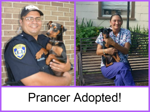 Prancer adopted