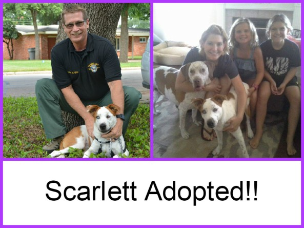 Scarlett adopted