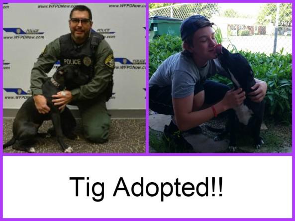 Tig adopted